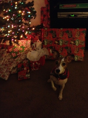 Jack Russell Christmas