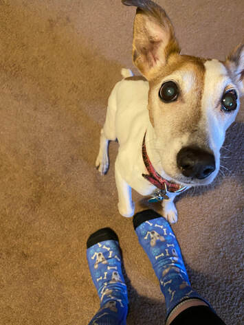 Dog and dog socks.