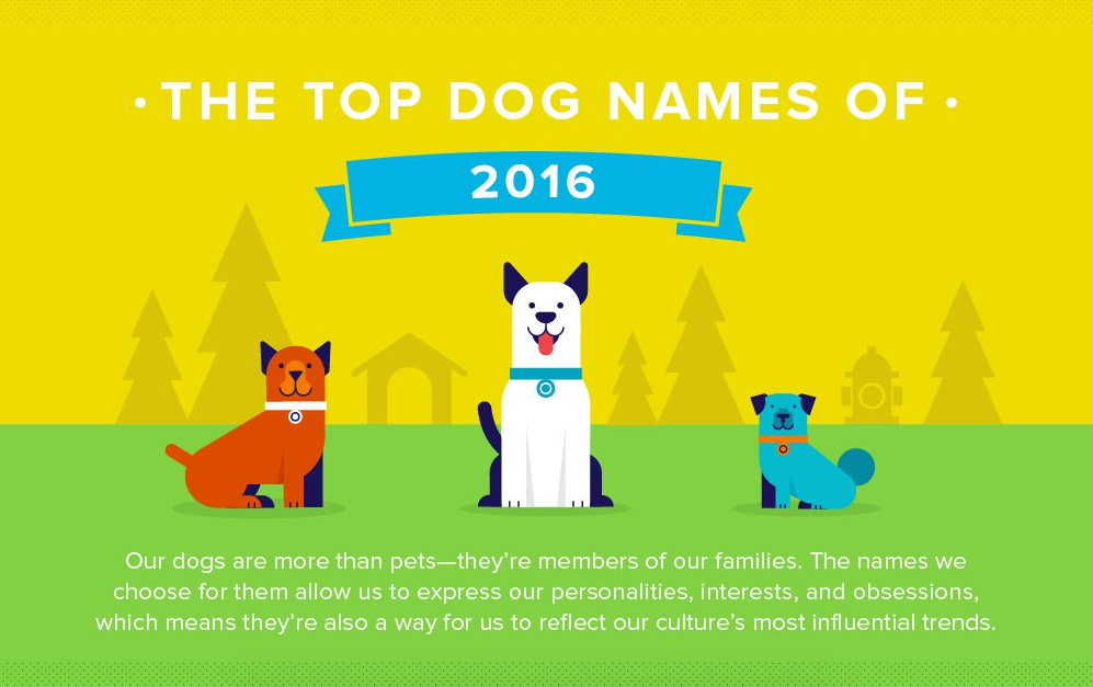 Top dog names infographic header.